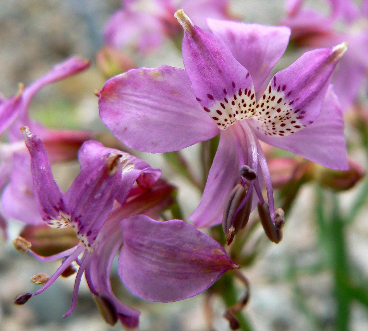Названия различных цветков