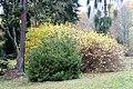Americká zahrada - Chudenice - Okres Klatovy. (012).jpg