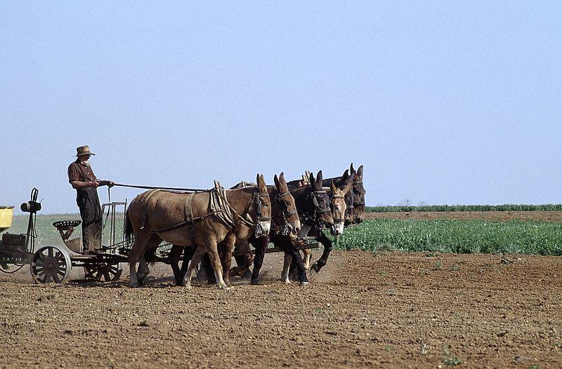 File:Amish life in Lancaster, 14504v.jpg