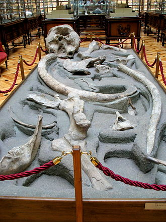 Museo Geominero - Fossils on the ground floor of the museum
