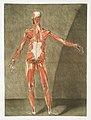 Anatomical illustration by Arnauld-Eloi Gautier-Dagoty , digitally enhanced by rawpixel-com 8.jpg