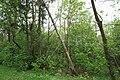 Angelehnter Baum 21052019.jpg