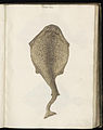 Animal drawings collected by Felix Platter, p1 - (142).jpg