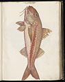Animal drawings collected by Felix Platter, p1 - (57).jpg