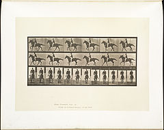 Animal locomotion. Plate 618 (Boston Public Library).jpg