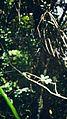 Aranhas pelo caminho em meio as trilhas.JPG