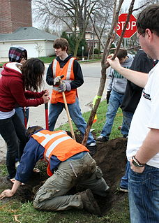 Arbor Day holiday in which individuals and groups are encouraged to plant and care for trees