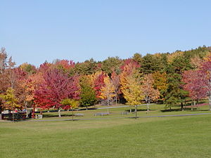 Vestal, New York - Arnold Park in the Fall