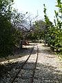 At Pardes Minkov - The Tarazina Tracks P1220125.JPG