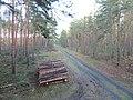 Ausgelichtet - Pflegearbeiten im Wald - panoramio.jpg
