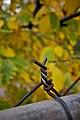 Autumn (1642823922).jpg