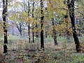 Autumn colours from the Grand Avenue - Nov 2012 - panoramio.jpg