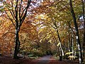 Autumn in Burnham Beeches - geograph.org.uk - 600945.jpg