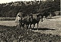 BASA-2072K-1-316-32-Plowing with horses in Bulgaria.jpg