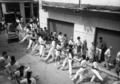 Baile de San Roque Calamocha.png