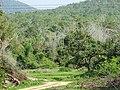 Bandipur Tiger Reserve, Karnataka DSC00730.JPG