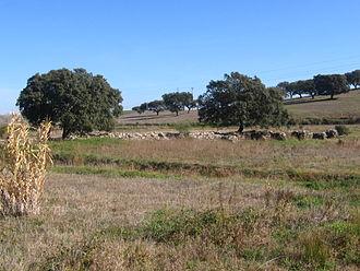 Pax Julia - Image: Barragem romana N S Represa