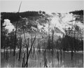 "Barren tree trunks rising from water in foreground, stream rising from mountains in background, ""Roaring Mountain, Yello - NARA - 520000.tif"