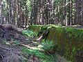 Bartošovice v Orlických horách, protitankový příkop u R-S 62 (rok 2010; 02).jpg