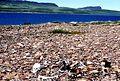 Bathurst Inlet + 1998-07-11.jpg