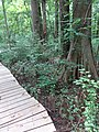 Battle Creek Cypress Swamp 23.jpg