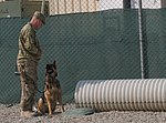 Battle buddy of a different kind 140224-A-ZA744-010.jpg
