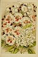 Beautiful flowering trees and shrubs for British and Irish gardens (1903) (20332544976).jpg