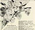 Beckert seed and bulb co. - a 1933 annual (1933) (19736919194).jpg