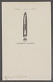 Belemnites osterfieldii - - Print - Iconographia Zoologica - Special Collections University of Amsterdam - UBAINV0274 090 08 0010.tif