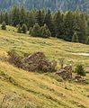 Bergtocht van Cogolo di Peio naar M.ga Levi in het Nationaal park Stelvio (Italië). Ruïne naast het voetpad.jpg