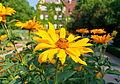 Berlins botaniska trädgård-IMG 8646.jpg
