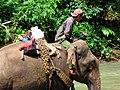 Bhamo-elefantes-d03.jpg