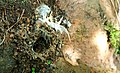 Big Black ant nest with feathers & Stones.jpg