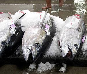 Bigeye tuna - Image: Bigeye tuna on ice