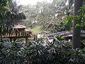 Bird Park in Kuala Lumpur (Malaysia) (37).jpg