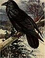 Bird lore (1918) (14568612788).jpg