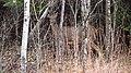 Birds Hill Provincial Park, Manitoba (494358) (12038544544).jpg