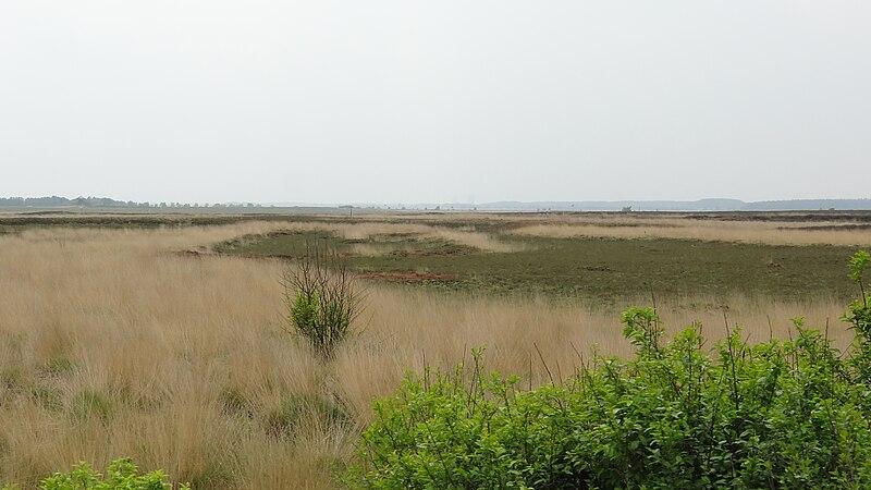 Blick auf das Naturschutzgebiet Sprakeler Heide.jpg