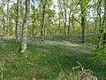 Bluebell Woods (4).jpg