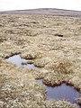 Bogs, Carn nan Tri-tighearnan - geograph.org.uk - 563888.jpg