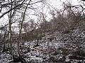 Boreč (České středohoří), les na úpatí IV.jpg