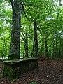Bosque de las Brujas- Roncesvalles.jpg