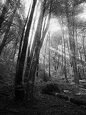 Bosque del Señorío de Bertiz 2.jpg
