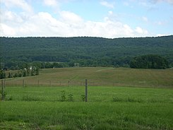 Boyd Big Tree Preserve meadow.jpg