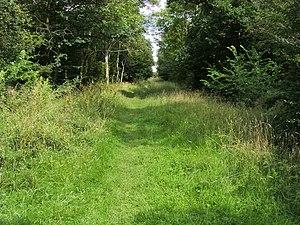 Brampton Wood - Image: Brampton Wood geograph.org.uk 1552625