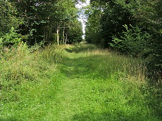 Brampton Wood nature reserve in the United Kingdom