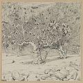 Brooklyn Museum - Fig-tree Valley of Hinnom - James Tissot.jpg