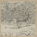 Brooklyn Museum - Fig-tree Valley of Hinnom - James Tissot.jpg