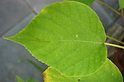 Closeup of a leaf