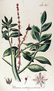 <i>Brucea</i> genus of plants